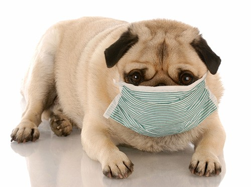 Kennel Cough - What is It and Who is at Risk?